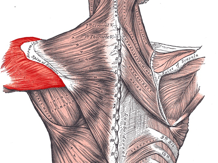 Chiropractic Care | Novi Michigan | Orthopedic and Neurological Tests